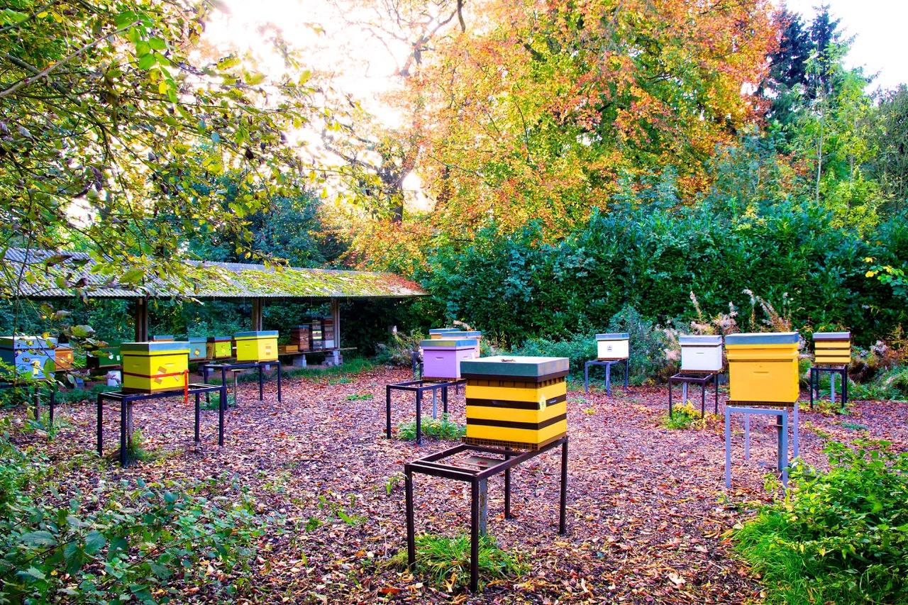 12-ruches-CRIE-Mariemont