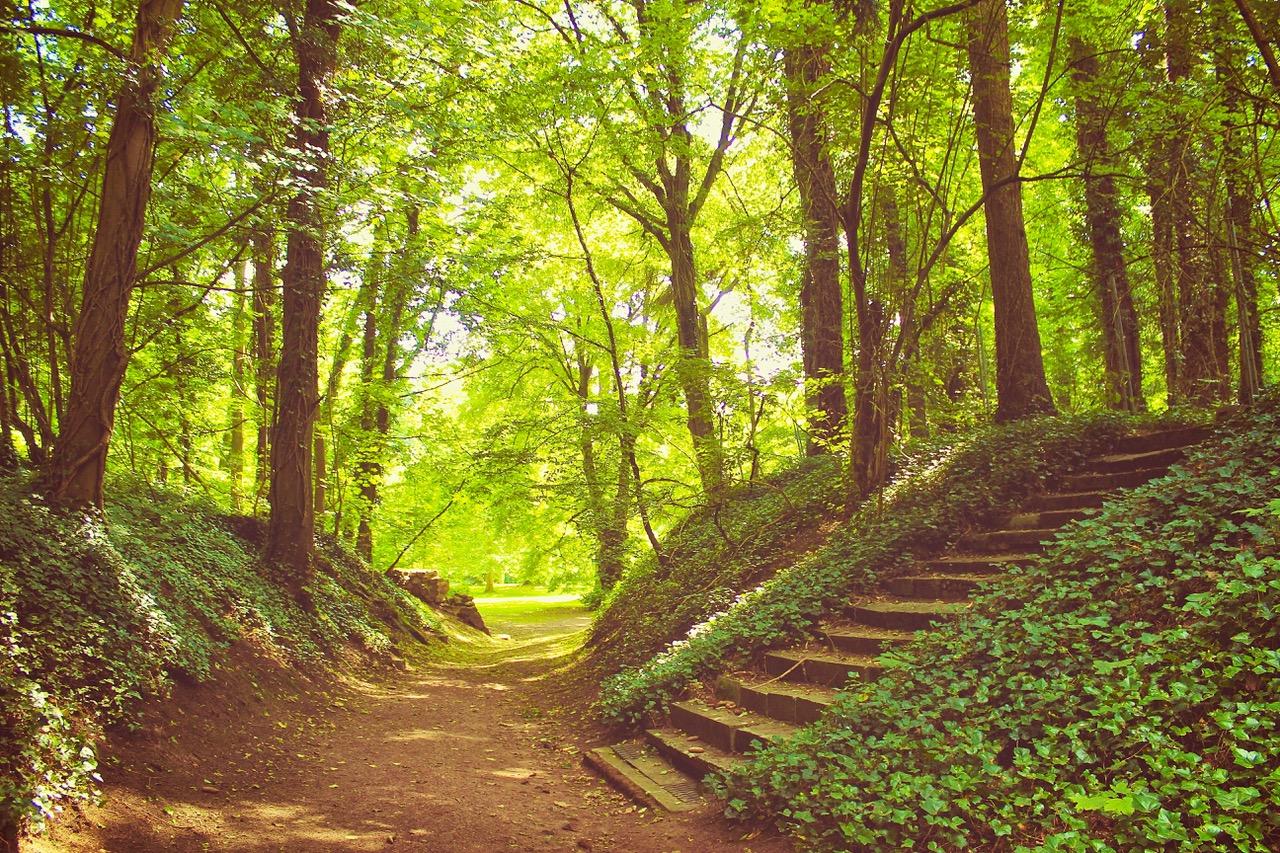3-escalier-parc-mariemont