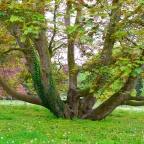 une variété d'arbres d'exception